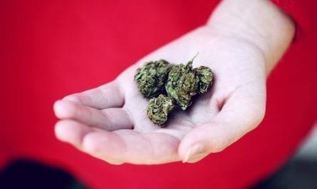 Holding Weed Marijuana